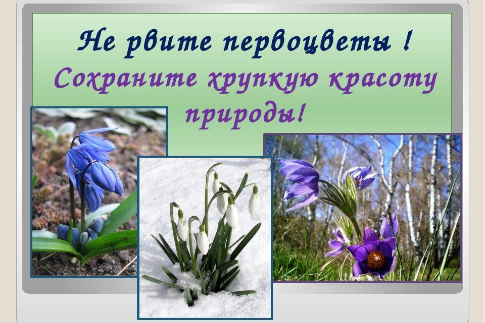 Берегите первоцветы!!!